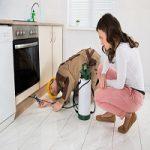 home-pest-control-1-150x150
